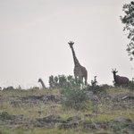 The Sentinel On Our Walking Safari
