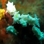 Sea Cucumber's Paradise