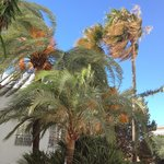 Windy day... palms near balcony