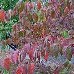 fall foliage @ Hawks Nest SP, WV