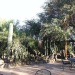 Some of the cactus garden