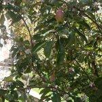 Vista de los Manzanos desde la Habitacion Gris
