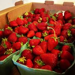 Local strawberries from Port Alberni