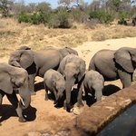 elefanti alla piscina
