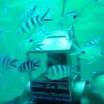 Solar Under Sea Walk