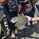 Boat trip -Tanjung Rhu