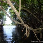 boatride through mangrooves is a lifetime experience