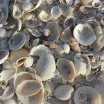 海灘上很多貝殼