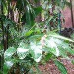 Plantes exotiques