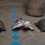 Les 2 petites tortues du Riad :)