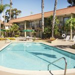 Luxuriate in our outdoor pool in an enclosed courtyard surrounded by palm trees.