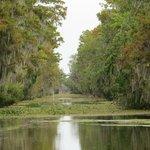 Beautiful & pristine bayou