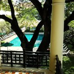 Yet another photo of tree and pool