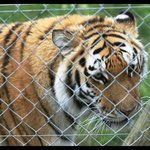 Thanks to Jukani and other wild life sanctuaries for saving these endangered creatures from exti