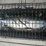 poisson grillé frais du jour