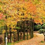 Toryo Park