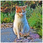 Jasper, one of the grounds kitties...
