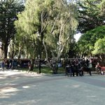 Conifers and local patrons in the plaza