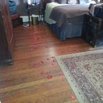 rose petals inn keeper left for us on floor!