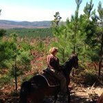 Atop horseback!!!
