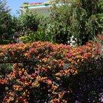 Cilaos maison fleurie