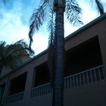 Unmanicured palm trees in the courtyard of building 7