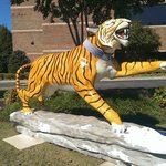 A Memphis Tiger in the yard in front of the hotel