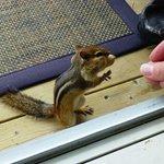 Dennie the chipmunk 2