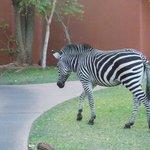 Amanecer entre animales hermosos