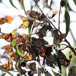 Monarch Grove Sanctuary 2