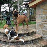 I cani di casa