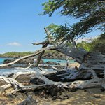 Wai'alea Beach