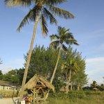 Picnic shelter overlooking ocean