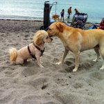My dog, Bruce makes a friend at Brohard Paws Beach today!