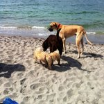 Dogs, dogs, dogs! Meeting & greeting at Brohard Paws Beach!