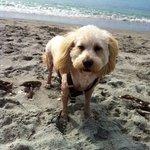 """""""I LOVE Brohard Paws Beach in Venice, FL!"""" - Bruce 11/10/13"""
