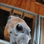 eines der Pferde am Reiterhof