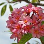 Beautiful Flora at Lake Argyle Resort & Caravאוירה מצוינת , אוכל טעים מאד , שירות מצוין , המסעדה