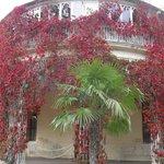 растения обрамляют здание