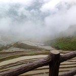 arrozales con niebla y lluvia