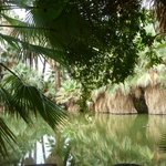 The beautiful Oasis on a walk round the Inn grounds