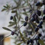 Olivlundar