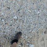 Broken corals on the shore.