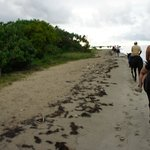 Horseback trip on the beach and ocean
