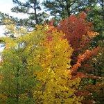 Talimena Scenic Drive - Ouachita National Forest