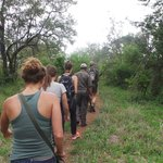 walking safari during Bushwise stay