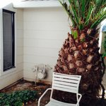 Small patio had a huge palm tree and window from another room overlooking it!