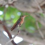 Hummingbird Beauty of Belize