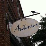 Bild från Antonia's