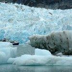 Le Polaris dans les glaces